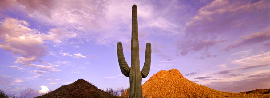 Image of Cactus and Sky