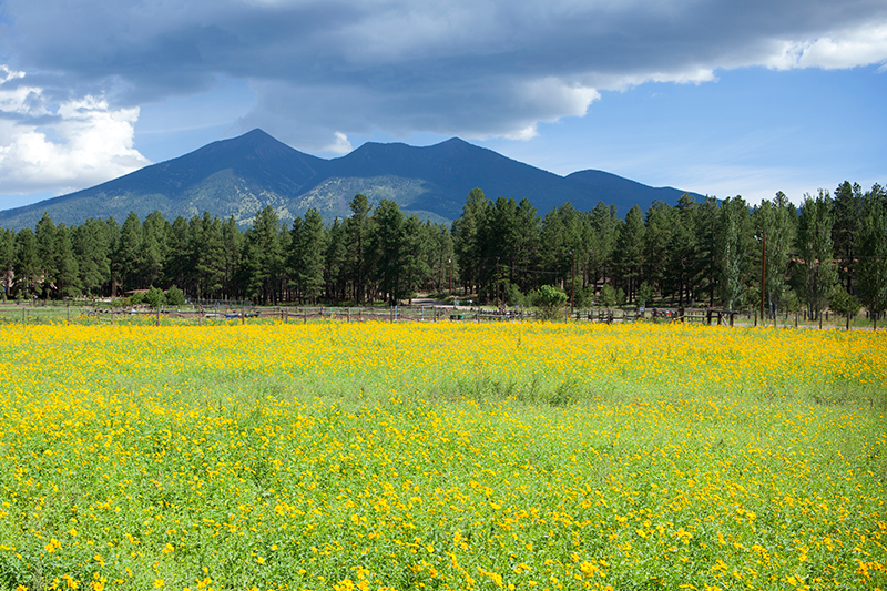 The San Francisco Peaks, Flagstaff, AZ